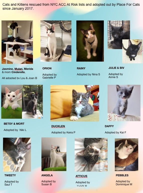 Place for Cats Adoptions 2